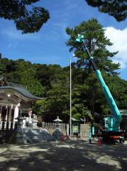保護樹木剪定