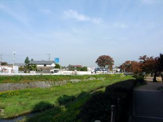 山口の大ケヤキ遠景